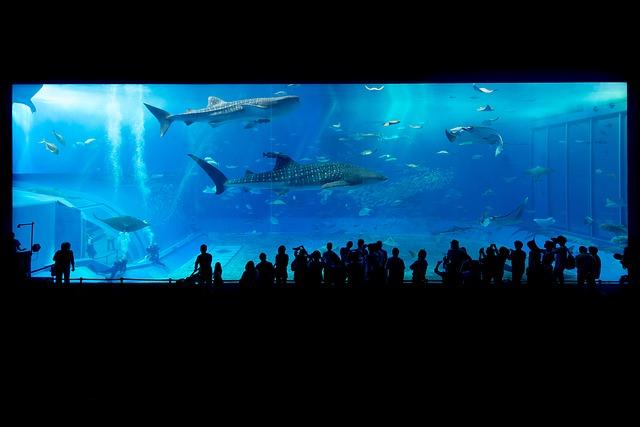 pixabay aquarium-725798_640